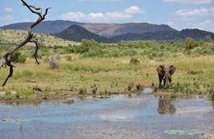 An elephant in the Pilanesberg National Park. North West Province. BelAfrique your personal travel planner - www.BelAfrique.com