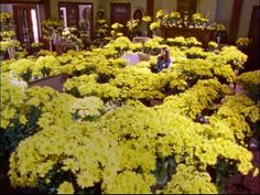 a thousand yellow daisies...