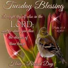Tuesday Blessing, Psalm Have a Blessed Day! Daily Scripture, Scripture Verses, Bible Scriptures, Happy Tuesday Morning, Happy Tuesday Quotes, Good Morning Picture, Morning Pictures, Psalm 37 4, Psalms