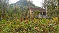 Raquel Superlinda: Passeio Pela Região Rural de Joinville SC