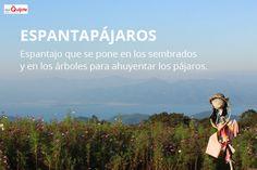 Spanish Word of the Day: ESPANTAPÁJAROS #Spanish #EnjoySpanish  www.donquijote.org/spanish-word-of-the-day/word/espantapajaros