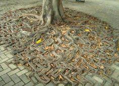 Resultado de imagen para trees and bricks