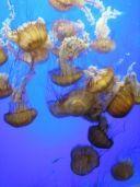 Marine Biology for Homeschool, from Harmony Fine Arts guru, Barb. Great resources