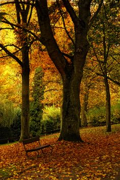 trees in automn (by TouTouke)