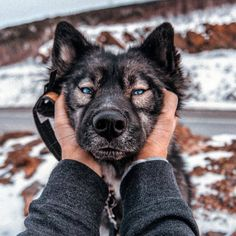 You will find everything related to dogs and puppies. Pretty Animals, Cute Funny Animals, Cute Baby Animals, Animals And Pets, Cute Baby Dogs, Cute Dogs And Puppies, Doggies, Beautiful Dogs, Animals Beautiful