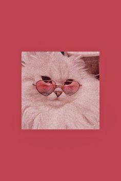 Cute Cat Wallpaper, Cute Disney Wallpaper, Cute Wallpaper Backgrounds, Animal Wallpaper, Cute Cartoon Wallpapers, Cute Baby Cats, Cute Little Animals, Cute Funny Animals, Cute Animal Photos