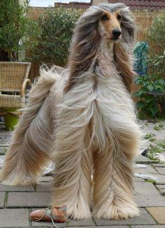 This Photographer Makes Dogs Look Like Breathtaking Runway Models - Google Search