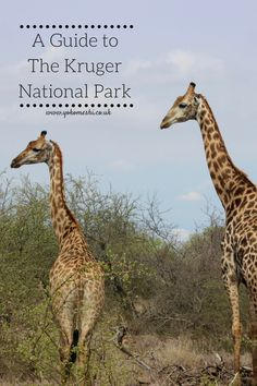 There are so many incredible parks in Africa - and for South Africa, this has to be number 1.