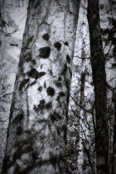 bwstock.photography  //  #shadows #leaves #tree #trunk #forest Black White Photos, Black And White, Shadows, Trunks, Leaves, Nature, Plants, Photography, Black White