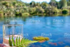 The Future of Pure Water royalty-free stock photo Water Sources, Image Now, Royalty Free Stock Photos, Herbs, Pure Products, Future, Fuentes De Agua, Future Tense, Herb