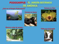 Parque Nacional Podocarpus considerado por tener uno de los mejores Jardines Botánicos de América