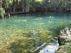 Manatee Springs in Florida, my favorite campground and swimming.