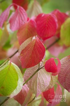 ✯ Colorful Leaves