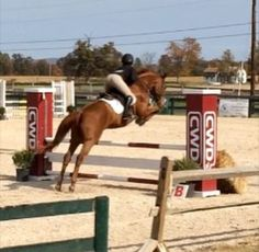 Rob says this horse is a natural!