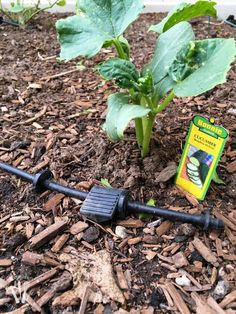 How to Install a Drip Watering System for the Garden Drip Watering System, Drip System, Homestead Gardens, Gardening, Easy, Check, Drip Irrigation System, Lawn And Garden, Urban Homesteading