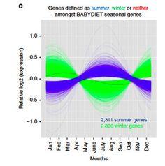 Seasonal Genes   The Scientist Magazine®