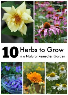 10 Herbs to Grow in a Natural Remedies Garden - How to grow them, what health benefits they offer, and recipes to use them in.