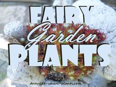 Fairy Garden Plants; get in on the miniature landscape craze, plant some
