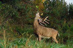 Alsheimer on Deer & Deer Hunting