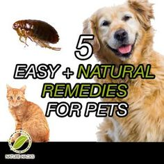 5 Simple Pet Remedies--These are great tips. Check them out.