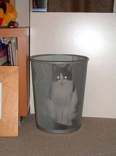 Cats.  They're so silly.  And they take themselves so seriously, even when they're sitting in a trash can.