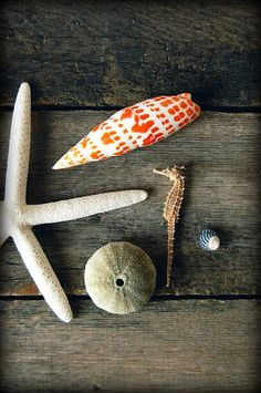 shells: treasures from the sea
