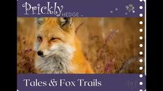 Here at Prickly Hedge we have badgers, foxes and all manner of wildlife that we film, watch our animals on Youtube. Genre Study, Animal Medicine, Pet Fox, Story Elements, Blended Learning, Comprehension Questions, Meditation Music, Relaxing Music, Writing Activities