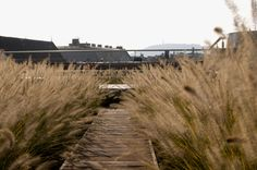 A map of the best contemporary landscape architecture projects from around the world. Perennial Grasses, Perennials, Contemporary Landscape, Budapest Hungary, Landscape Architecture, Terrace, Around The Worlds, Country Roads, Garden