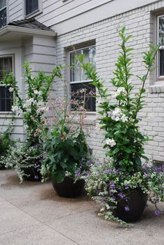 possibly my favorite container plantings so far
