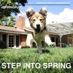 Notice a slight spring in your puppy's step? Well your active puppy can be our Woof of the Week! Pupdate a photo with #SpringPup to enter!