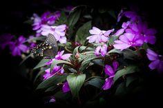Even butterflies love LC! Photo by Simina Quorishi.