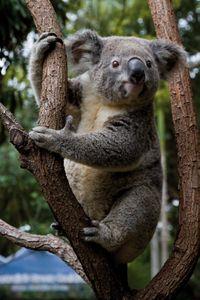Currumbin Wildlife Sanctuary: Green Challenge Zipline Canopy Tour in Gold Coast, Australia
