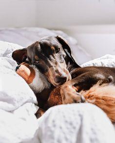 """Hát mi ez, ha nem szerelem?😍🥰 Az első játék ami már több, mint egy hónapja """"életben van"""". Nudlinak mániája a plüssöket szétrágni, általában a szemüknél rág egy lyukat ott kihúzza a vatelint, majd kifordítja teljesen 😅😂 A ti kutyusotok van valamilyen rutinja a plüssök szétrágására? 😂 Instagram Feed, Marvel, Dogs, Animals, Animales, Animaux, Pet Dogs, Doggies, Animal"""