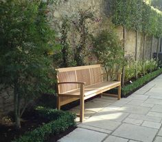 pleached trees in narrow garden bed.