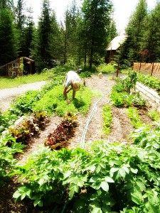 Back to Eden Garden in Idaho