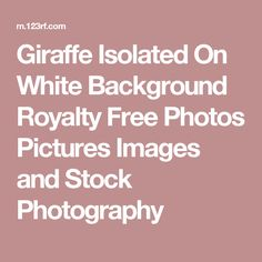 Giraffe Isolated On White Background Royalty Free Photos Pictures Images and Stock Photography