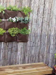 Mais do que apenas embelezar o lar, muitas variedades botânicas contribuem para uma purificação do meio ambiente interno. Saiba quais são as que deve ter no interior para melhorar a sua saúde.