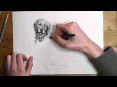 """In diesem Video-Tutorial erkläre ich dir ganz genau, wie du Hunde zeichnen lernen kannst. Aber sei gewarnt! Bei 160 verschiedenen Hunderassen wird """"dein"""" Hun..."""