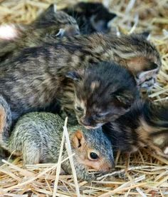 Baby squirrel and kitten