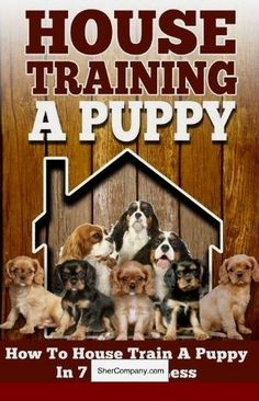 Originality Counts When Picking A Dog Kennel Name Dog Shows Show