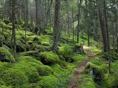great smoky mountain national park - Google Search