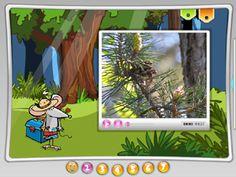 Rośliny w lesie. Multimedia, Montessori, Education, Maths, Youtube, Onderwijs, Learning, Youtubers, Youtube Movies