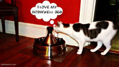 ODIN LOVES HIS DRINKWELL 360 AND TWO LUCKY CAT WISDOM 101 READERS CAN WIN THEIR OWN!  TO ENTER THIS GIVEAWAY:  Leave a comment at this post anytime before it ends on 11:59 pm ET July 25, 2013. For additional chances to win, share this post Facebook, Twitter, Google+ or Pinterest letting me know in a comment where you shared. The giveaway is open to residents is the U.S. and Canada. The two winners, selected by a random draw will be announced on July 26, 3013.