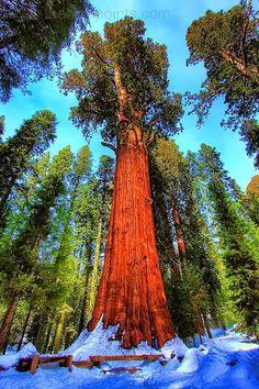 Sequoia National Park, California, USA