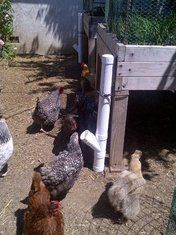 PVC Chicken Feeder : 4 Steps (with Pictures) - Instructables Backyard Chicken Coops, Diy Chicken Coop, Chickens Backyard, Chicken Feeder Decor, Chicken Feeders, Chicken Life, Chicken Houses, Chicken Tractors, Building A Chicken Coop