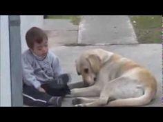 Cachorros para Crianças com Síndrome de Down | Portal PcD On-Line