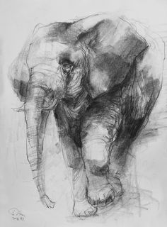 Animal Sketches, Animal Drawings, Drawing Sketches, Art Drawings, Elephant Book, Charcoal Art, Figure Sketching, Art Reference Poses, Drawing Techniques