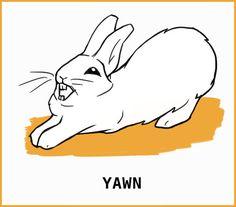 Rabbit Body Language: An Illustrated Guide Silly Rabbit, Pet Rabbit, Pet Bunny Rabbits, Bunnies, Rabbit Facts, Rabbit Behavior, Female Rabbit, Guinea Pig Care, Guinea Pigs
