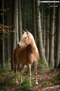 Vio im Wald ....!