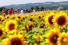 Le Tour de France 2014 Stage 13